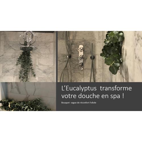 Eucalyptus Foliole douche