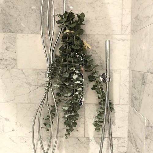 Foliole Bouquet Eucalyptus