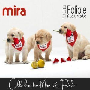 Collaboration Fondation Mira et fleuristefoliole.com