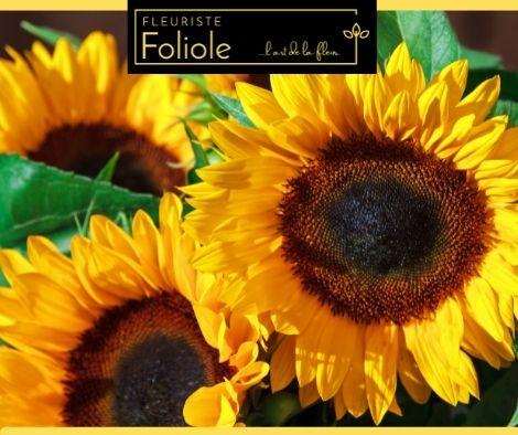fleuristefoliole.com tournesol (